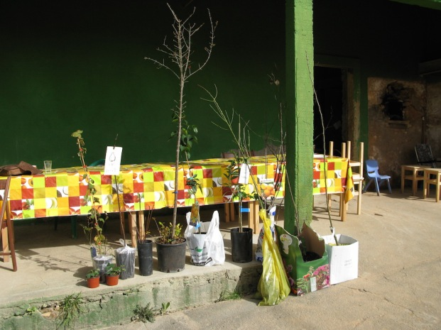 As prendas do alunos - Árvores de fruto